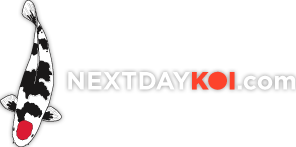 Next Day Koi